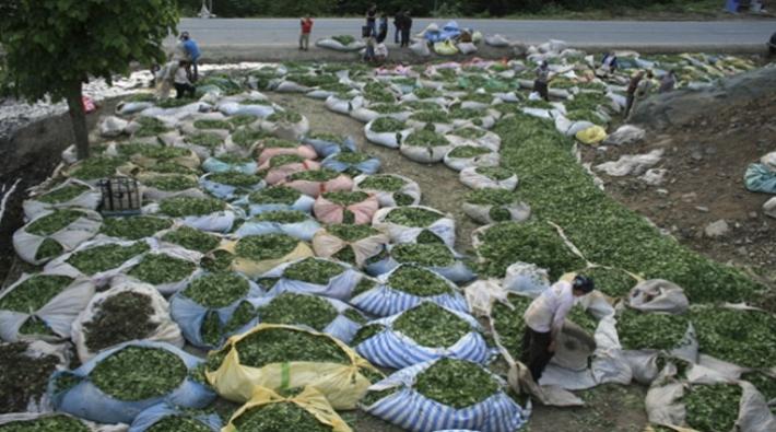 Çay üreticileri: enflasyon yüksek, fiyat düşük