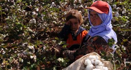 Hem tarım işçisi, hem kadın, hem Kürt/Yağmur Demir