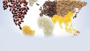 Söküğü gıda egemenliği ile dikmek - Umut Kocagöz