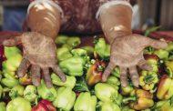 Seçim sonrası gıda politikalarında geleceğe bakmak / Özlem Işıl