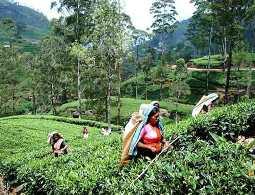 Çay Kur üreticinin sigortasıdır,satılamaz