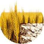 Kuraklık ve yanlış politikalar tarımı vurdu