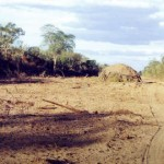 Paraguay yerlilerinin topraklarını ulusötesi et şirketleri talan ediyor