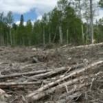 AKP'nin katlettiği ormanlık alan Kayseri büyüklüğünde