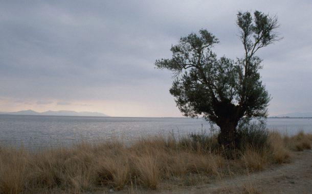 Ölmez ağaca ölüm fermanı! / Abdullah Aysu