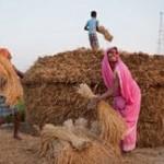Özgürlüğü üretmek: Çeltik Yoğunlaştırma Sistemi ile kırsalda sessiz bir tarım devrimi