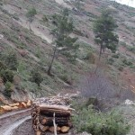 Köylülerden ağaç katliamına tepki: 'Seyreltme' değil 'Sıfırlama'