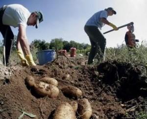 Yunan çiftçisinin erken emekliliğine tırpan