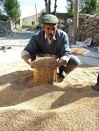 Ahlatlı çiftçi GDO'lu tohuma değil