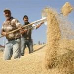 Kuraklığın Vurduğu Çiftçiler Mallarını Satışa Çıkarıyor