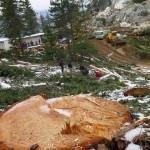 Antalya'da mermer ocağı için ağaç katliamı