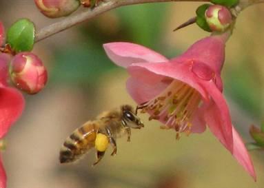 Arılara neler oluyor