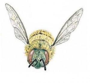 Arılara neler oluyor?