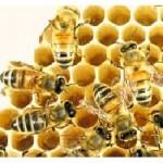 Serin hava arıları şaşırttı, bal üretimi düştü