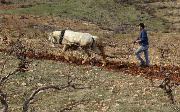 Toprağında veya toprağını terk ederek işçileşme / Ali Bülent Erdem