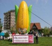Hoşgeldin genetiği değiştirilmiş mısır