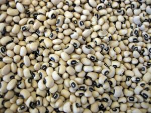 Küba'da tarımsal dönüşüm: Sürdürülebilir tarımla açlığı tarihe gömdüler / Tayfun Özkaya