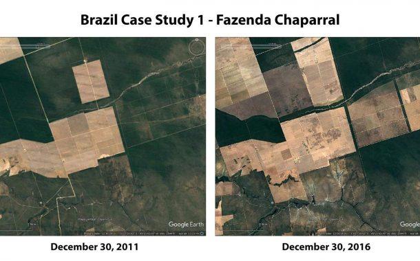Burger King, et üretimi için Amazon ormanlarını yok ediyor!