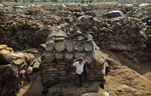Hindistan'da insanlar açken buğdaylar çürütülüyor
