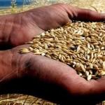 Nasıl Bir Tarım Bakanlığı? / Abdullah AYSU