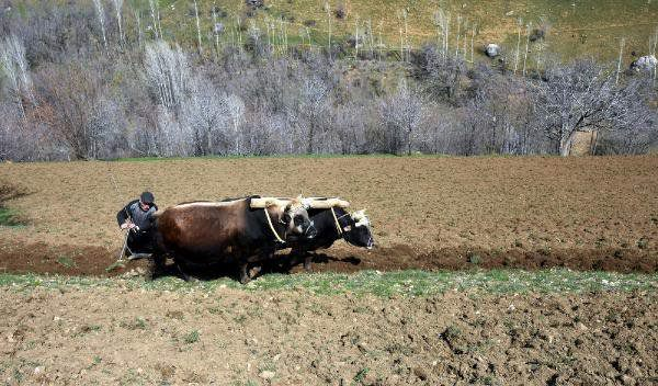 Küçük çiftçinin tasfiyesi  / Abdullah AYSU