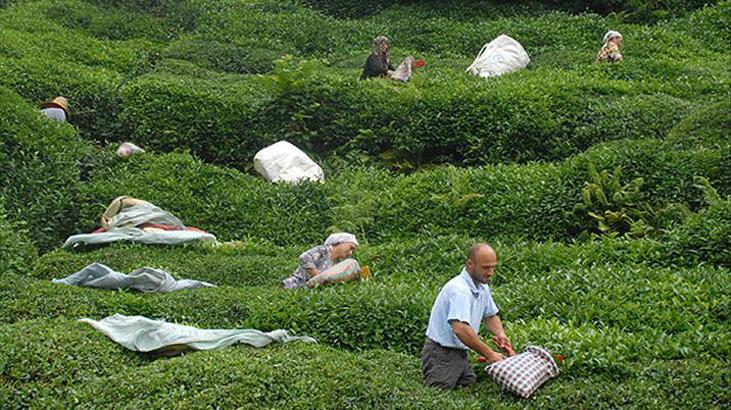 Mevsimlik işçiliğin adil organizasyonu / Özge Güneş