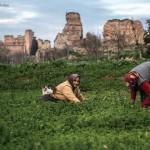 Türkiye'de ve dünyada küçük aile çiftçiliği ve yeniden köylülük / Cengiz Aktar