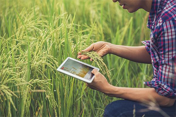 Çiftçi bilgiye erişemiyor