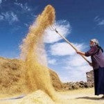 Tarım ve kırsalda sosyal koruma… / Ali Ekber Yıldırım