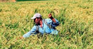 Türk tarımı böyle tasfiye edildi / Gökhan Günaydın