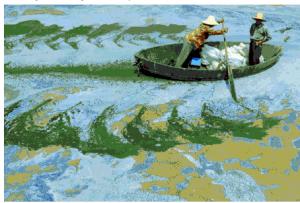 Çin'deki tarım arazileri ile ilgili 6 akılalmaz gerçek