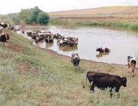 Çiğ süt üreticileri:
