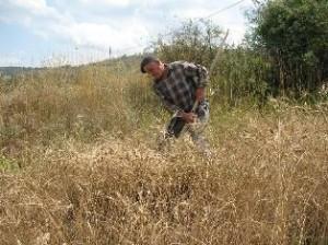 Tarım Bakanı Mehdi Eker buğday alım fiyatını açıkladı: ton başına 720 lira