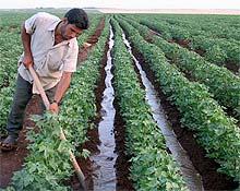 Siyasi partilerin tarıma bakışı:  CHP, AB-IMF-DB'den bağımsız değil
