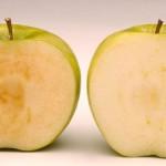 ABD'den genetiği değiştirilmiş elmaya onay