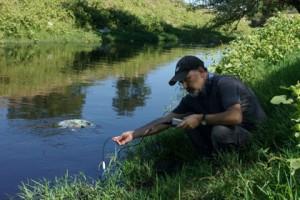 Ergene Nehri kurbağaları bile zehirledi