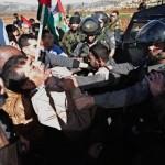 Böylesi de var: Filistinli bakan Zeytin dikerken öldürüldü