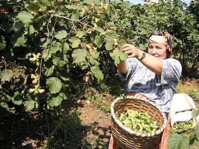 Çiftçinin borcu tarım desteğinden tahsil edilecek