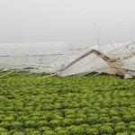 Çiftçiyi bu sefer de fırtına vurdu