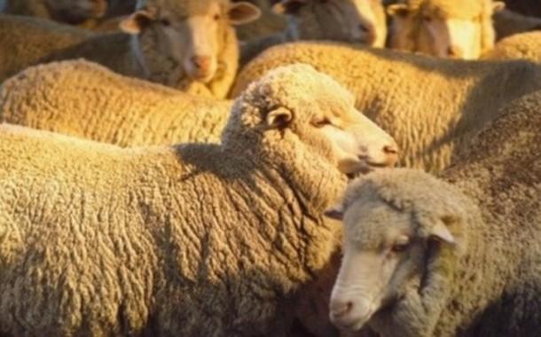 Fransa'nın hastalıklı hayvanları Türkiye'ye mi geliyor? /  Ali Ekber Yıldırım