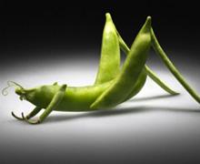 Hakimiyet kayıtsız şartsız Monsanto'nundur (!)