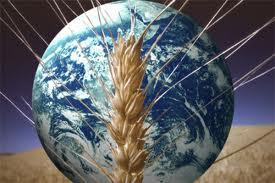 Devletin tarım politikalarından memnun musunuz? / Abdullah Aysu