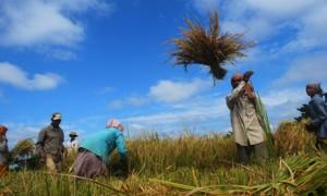 """Gıda Krizi Korkusu, Birleşmiş Milletler'in Dünya Liderlerine Yaptığı """"Uyanın"""" Çağrısını Harekete Geçirdi"""