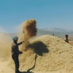 Buğday fiyatları açıklandı / Abdullah Aysu