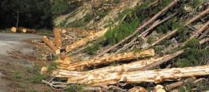 'HES'ler ormanları tahrip etmiyor' diyen Bakan bu fotoğraflara ne diyecek?