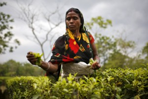 A tea garden worker plucks tea leaves inside Aideobarie Tea Estate in Jorhat in Assam, India, April 21, 2015. Unrest is brewing among Assam's so-called Tea Tribes as changing weather patterns upset the economics of the industry. Scientists say climate change is to blame for uneven rainfall that is cutting yields and lifting costs for tea firms. Picture taken April 21, 2015. REUTERS/Ahmad Masood