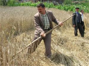 Tarımda İçler Acısı Tablo: Tarım Ülkesiyiz Ama Buğday İthalatımız Katlandı