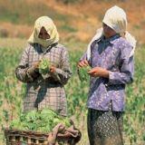 AB'nin toplattığı tarım ilaçlarını Türkiye kullanıyor