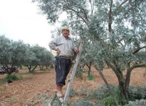 Kırıklar'da zeytin üreticilerine 2/b ile ikinci darbe