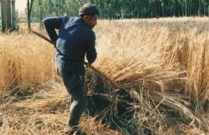 OECD Türkiye tarımını bitirmeye kararlı :